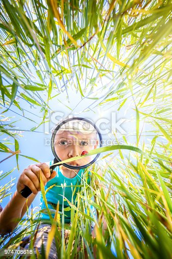 Boy explores a meadow through a magnifying glass. Child on the meadow with a magnifying glass in his hand. Little boy watches through the magnifying glass a ladybug in the grass in the meadow. Little scientist entomologist observes insects.