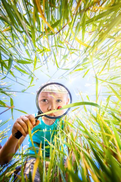 Kleiner Junge Uhren durch die Lupe einen Marienkäfer in den Rasen auf der Wiese – Foto