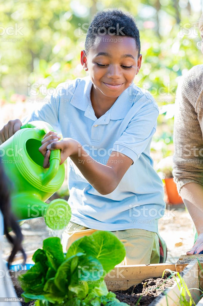Little boy watering plants in garden during science class stock photo
