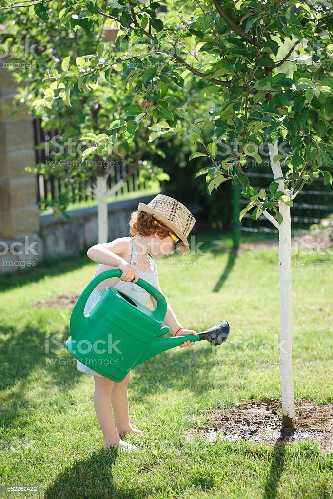 little boy watering trees in summer garden stock photo