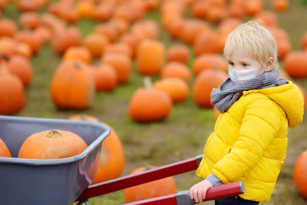 Little boy wearing face mask and keeping social distancing on tour of a pumpkin farm at autumn. Kid carriers wheelbarrow with pumpkins. Little boy wearing face mask and keeping social distancing on tour of pumpkin farm at autumn. Kid carriers wheelbarrow with pumpkins.Pumpkin used on traditional holiday Halloween and Thanksgiving Day. halloween covid stock pictures, royalty-free photos & images