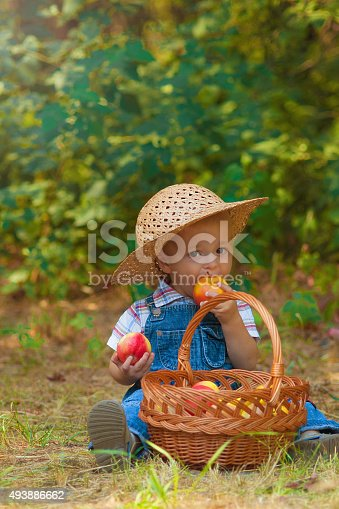 istock Little boy with a basket of apples in the autumn 493886662