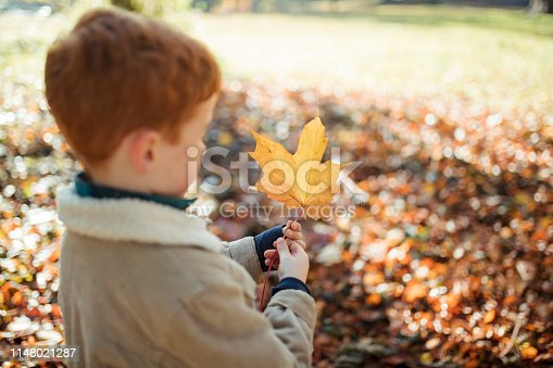 Little boy is standing in a public park in autumn with a maple leaf in his hands.