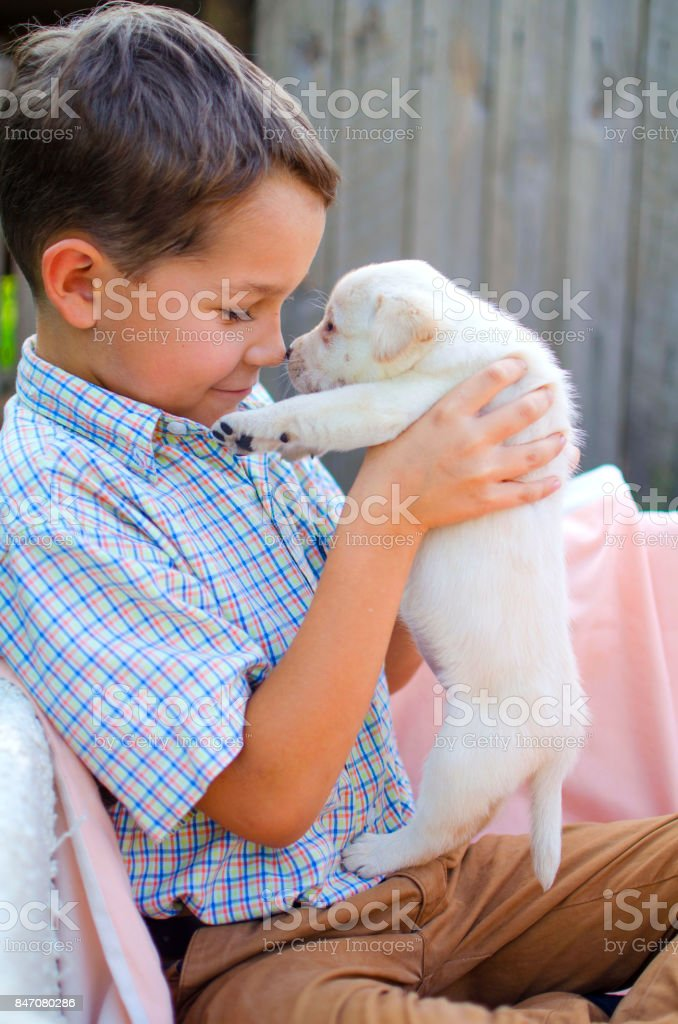 Little boy with cut Labrador puppy on his hands. Lovey friends - 8 years old man and pet stock photo