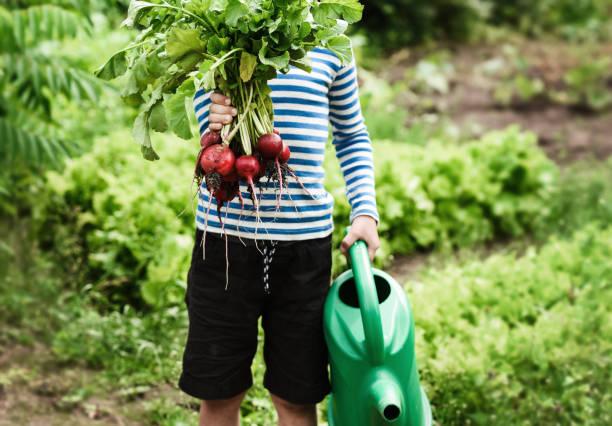 Kleiner Junge mit frischem Rettich an einem sonnigen Tag auf dem Bauernhof – Foto