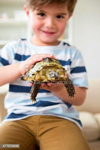 Turtles are Exotic Pets. Sulcata Tortoise or African spurred tortoise are in the veterinary examination room.