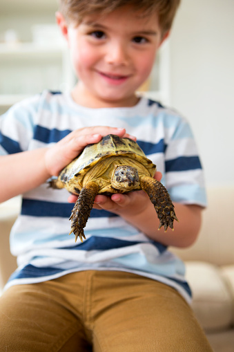 A cute little boy is holding his pet tortoise and is stroking it's shell. The boy is out of focus in the background but he is dressed casual and can be seen smiling.