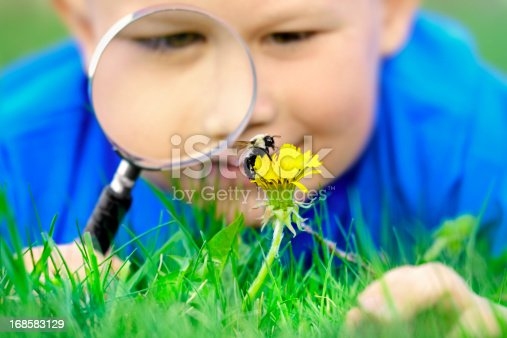 Boy looking at the bumblebee using magnifying glass, shallow DOF, focus on moving bumblebee.