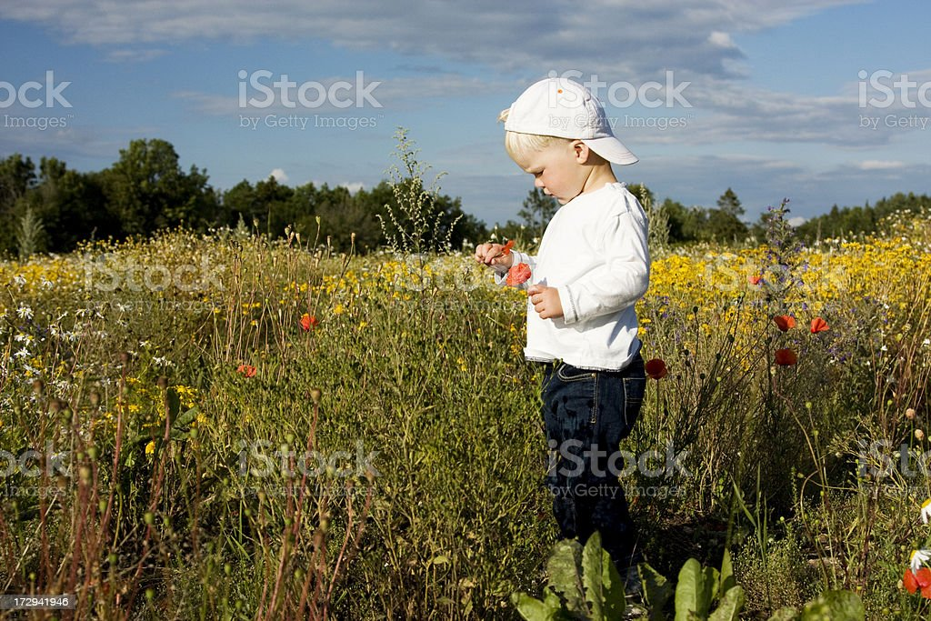 Little boy with Poppies in the field royalty-free stock photo