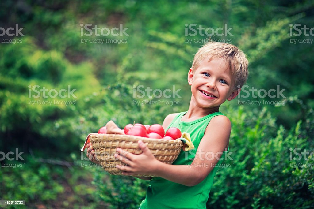 Little boy with tomatoes stock photo