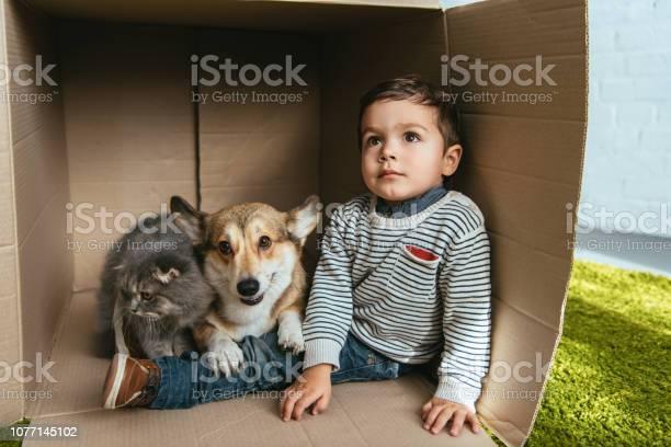Little boy with welsh corgi pembroke and british longhair cat sitting picture id1077145102?b=1&k=6&m=1077145102&s=612x612&h=c261wqi2ncgkltdlqlnjatbqrmy9uymi5p9nrnmwpbi=