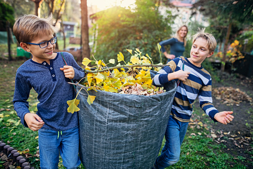Two boys aged 10 carrying bag of autumn leaves for composting. Nikon D850