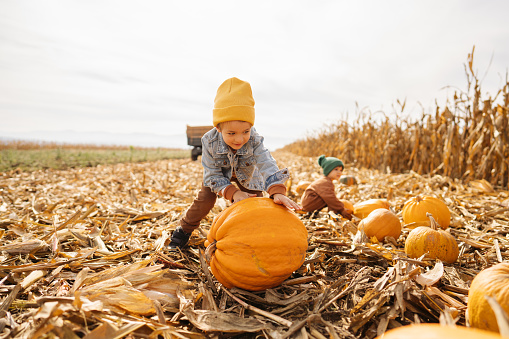 Photo of a little boy collecting pumpkins on a pumpkin patch, accompanied by his brother; family on a Halloween pumpkin patch adventure.