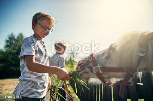 Happy little boys aged 10 are feeding grass to ponies. Sunny summer day. Nikon D850.