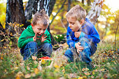 Little boys found a toadstool in an autumn forest.  Sunny autumn day in forest.