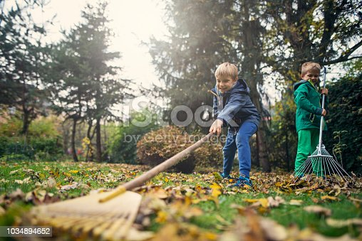 Little boys raking autumn leaves. Two brothers aged 7 are helping to clean autumn leaves from the garden lawn. Nikon D800