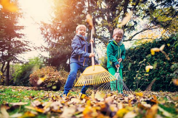 Little boys having fun raking autumn leaves stock photo