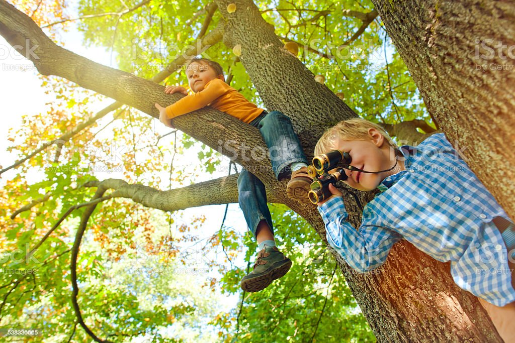 Little boys on a tree stock photo