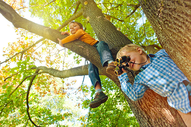 little boys on a tree - binocular boy bildbanksfoton och bilder