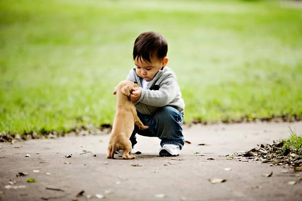 Little Boys Puppy stock photo