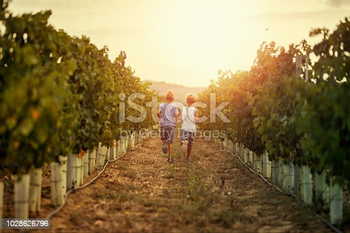 Little boys aged 9 running between vineyard rows in Tuscany, Italy. Nikon D850