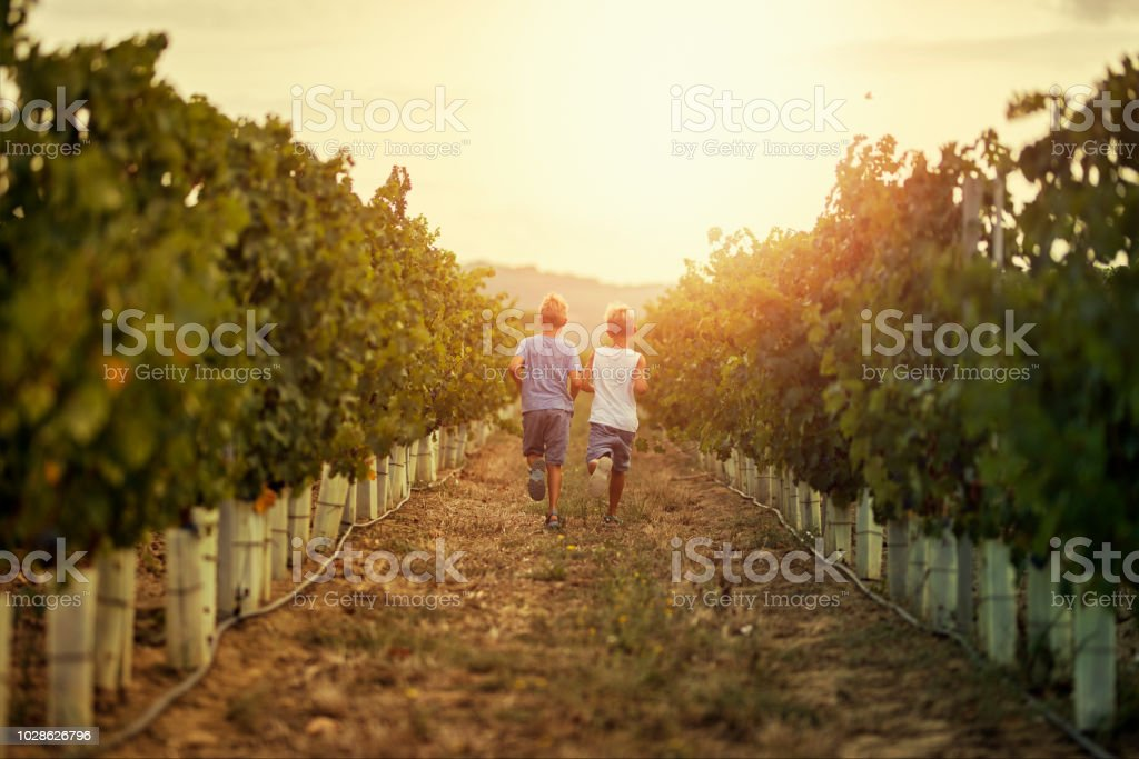 Little boys running in vineyard - foto stock