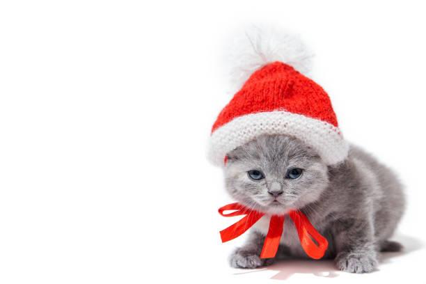 Little british kitten wearing santas hat isolated on white background picture id890629096?b=1&k=6&m=890629096&s=612x612&w=0&h=6faf7bkcaafbbjvgyr0ov23lhctnww2yhwobudc2bv4=