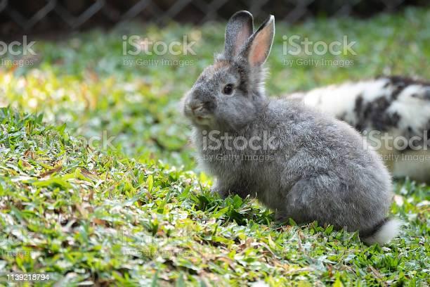 Little brown baby bunny rabbit picture id1139218794?b=1&k=6&m=1139218794&s=612x612&h=yiyueuqhvekv4ea7bsdqmhcl6utvehcmaswxp6zjtvo=