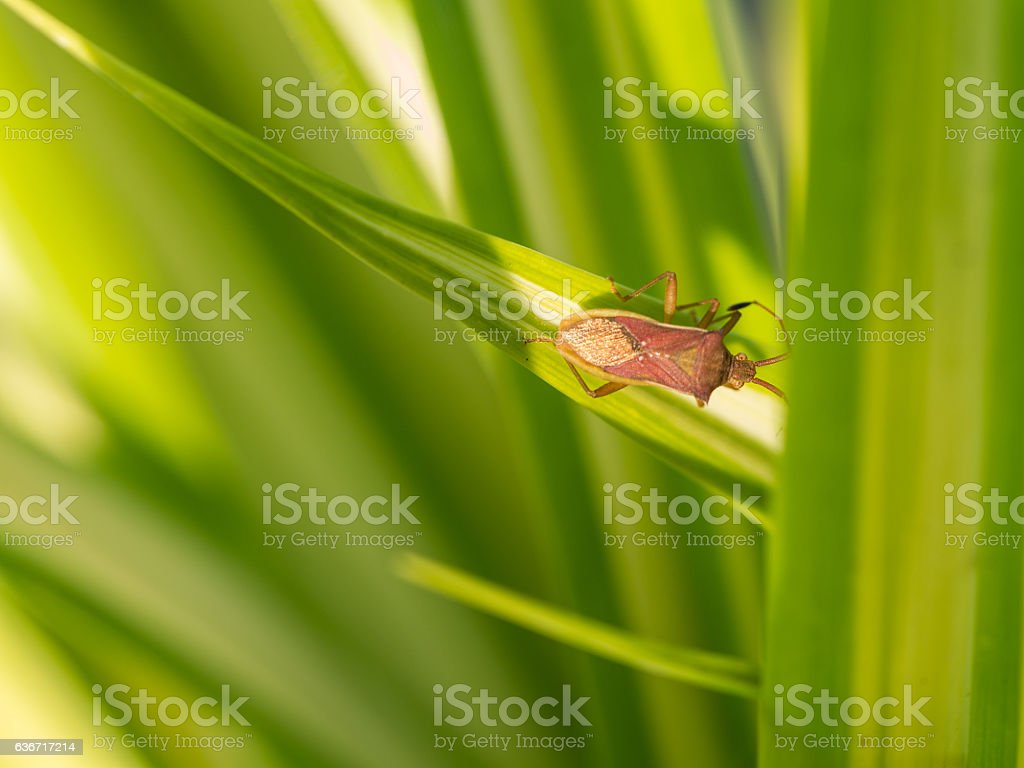 Little Brown Insect stock photo