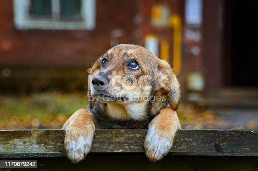 A homeless brown puppy with sad eyes is worth autumn on bench on the street