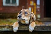 istock Little brown stray dog on the street 1170679242