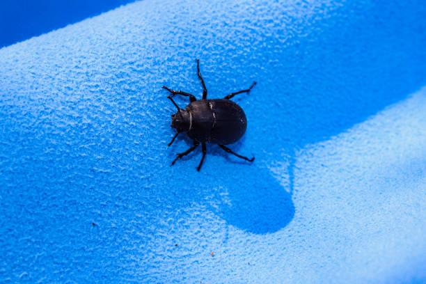 Kleiner Bug – Foto