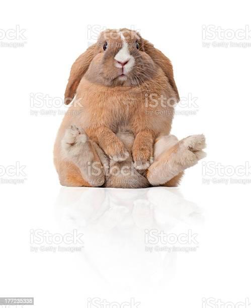 Little bunny sitting picture id177235338?b=1&k=6&m=177235338&s=612x612&h=1ropn6tkay twnza0rlp k5pf5m 5sbyrkixwsljldg=