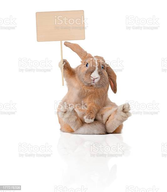 Little bunny with sign picture id177275205?b=1&k=6&m=177275205&s=612x612&h=lnlecfzymprxelft6pl4in7iwvbhgg1ffgb8ym2luqs=