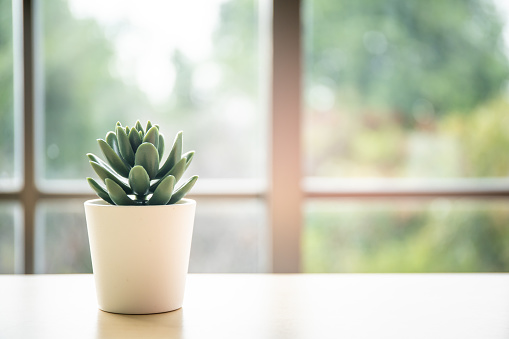 Small plastic cactus in a pod decorated on the table with blurred window and nature background, copy space.