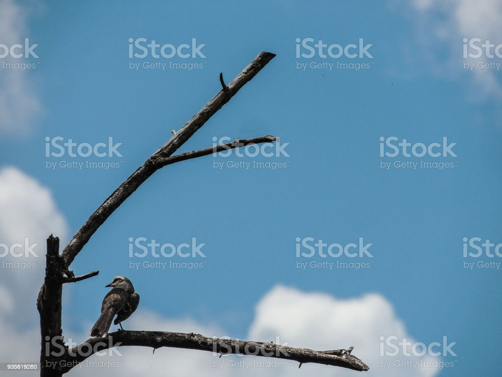 Little Canary on a Branch stock photo