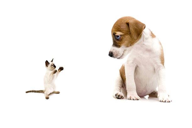 Little cat and dog picture id157608304?b=1&k=6&m=157608304&s=612x612&w=0&h=8ormwkgadrrjhqt3df0saqagfodpdhsyywfns9xjhgc=