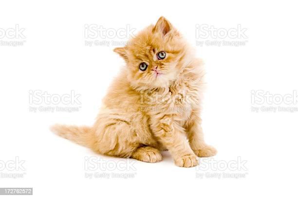 Little cat and iguana picture id172762572?b=1&k=6&m=172762572&s=612x612&h=obvgevliaupmpc7j5z2kmqh5htntza5yianboszqdbu=