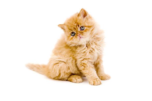 Little cat and iguana picture id172762572?b=1&k=6&m=172762572&s=612x612&w=0&h=b5kjybsys2gyy67 czvfmvqshmdl0xqszpyqixwitgw=