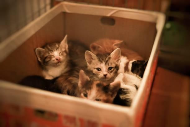 Little cat for giving picture id1163019298?b=1&k=6&m=1163019298&s=612x612&w=0&h=m4otxumfgenz3x3yq2joalfgdmvsqtnnlubmnz sco8=