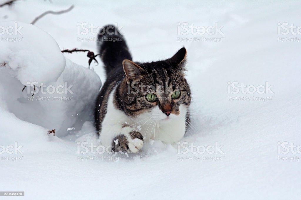 little cat in deep snow stock photo
