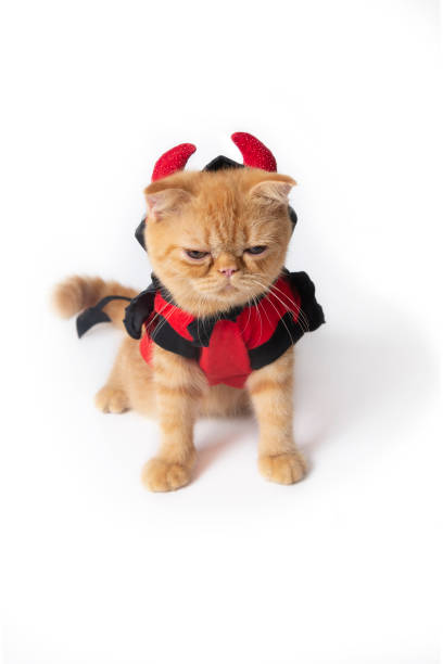 Little cat in halloween devil suit sitting and looking something on picture id1173568708?b=1&k=6&m=1173568708&s=612x612&w=0&h=iyrvpk9lsm5ptjpwvifk41vkbtewbuho medp3wm5js=
