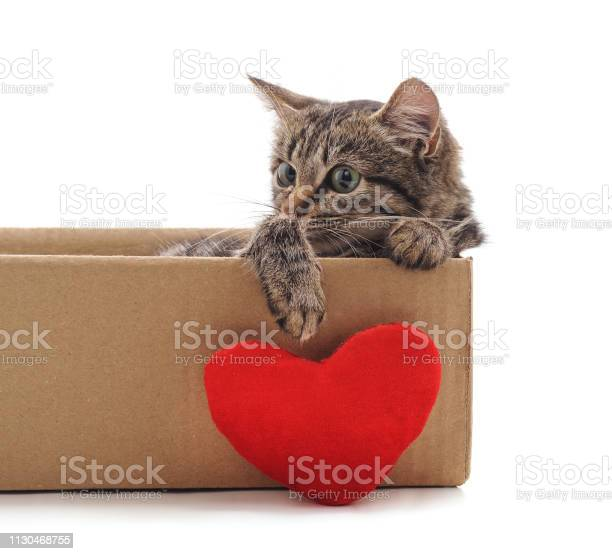 Little cat in the box with a toy heart picture id1130468755?b=1&k=6&m=1130468755&s=612x612&h=twoy4cim1ills vd  np4bhbpndqfp3zye64dvpzhjm=