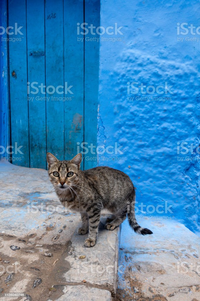 A little cat in the streets of Chefchaouen, Morocco stock photo