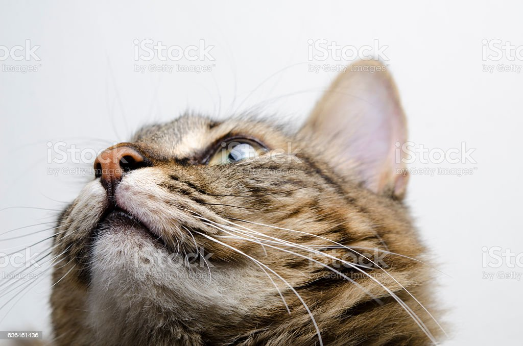 Little Cat Looking Up stock photo