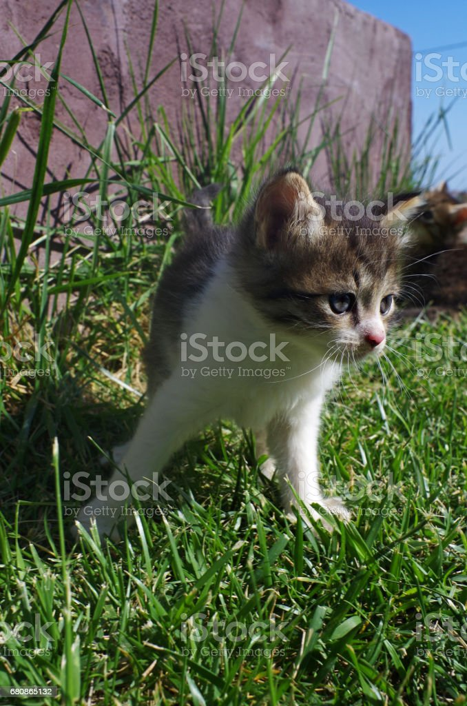 Little cat on the grass of the garden. royalty-free stock photo