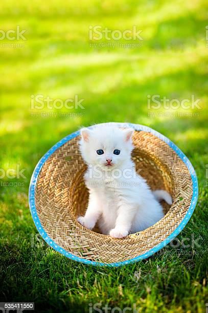 Little cat outdoor picture id535411550?b=1&k=6&m=535411550&s=612x612&h=2 rsia5xcrz55ntg5v 1pzn4pb7ir7 l4vzjetbmwta=