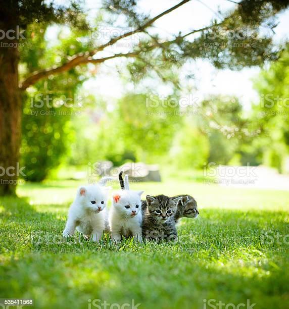 Little cat outdoor picture id535411568?b=1&k=6&m=535411568&s=612x612&h=ankcwgdlmxgdnsevsx6oqqw4f2uqlhpmdekosjuh2a0=