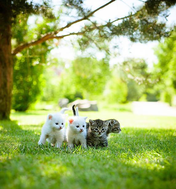 Little cat outdoor picture id535411568?b=1&k=6&m=535411568&s=612x612&w=0&h=rexyb6xmcntpzpr4dpmqfcuvoaj8ymzfr omzilhxks=