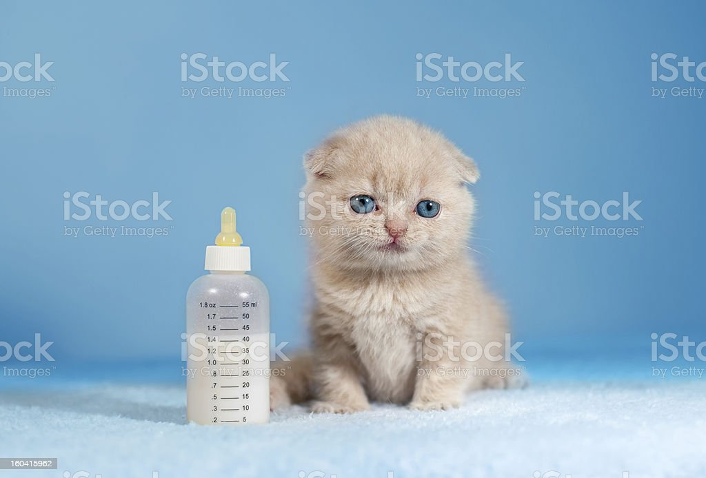 Little cat royalty-free stock photo